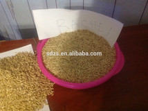 animal feed barley prices