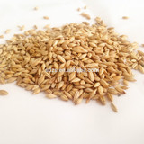 Barley for beer,origin Australia with good quality