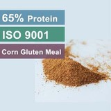 High Quality Corn Gluten Meal Factory For 65 Protein