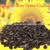 new crop chinese black Sunflower seeds 5009