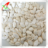 Dried pumpkin seeds snow white