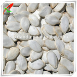 2014 chinese new crop pumpkin seeds snow white