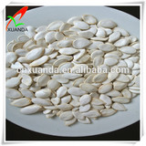 Chinese pumpkin seeds snow white