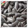 black oil sunflower seeds price for sauted for sale
