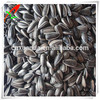 2014New Crop High Quality Hulled Striped Black Sunflower Oil Seeds for oil