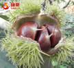 Fresh Organic Chestnuts