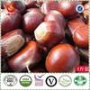 The best chinese species fresh chestnut