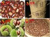 2014 new crop sweet fresh Chinese chestnut for sale