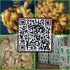 China, shandong province, the best quality of fresh/dried ginger, exported to Europe and the United States, the Middle East (gre