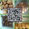 China's shandong province, one of the best fresh taro/taro seeds, exported to Europe and America, southeast Asia and Japan