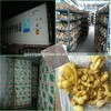 sell best price fresh Ginger and air dried ginger