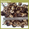 packed shitake,lentinula edodes in drum