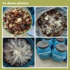 agaricus shittake,shiitake cultivation