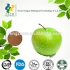 Organic Apple powder,Dried Apple Powder,Apple extract powder