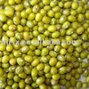 Chinese northest green mung bean for sprouting
