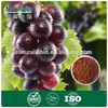 Natural Grape Seed Extract Powder