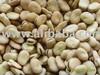 Broad Beans;fava bean