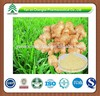 GMP factory supply herb Ginger Extract Gingerol 5%