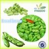IQF bulk green broad beans/Fava beans 2015 crop