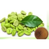 green coffee bean extract  powder  chlorogenic Acid 50%
