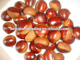 chestnuts in china