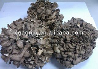 Organic Maitake Mushrooms(Grifola Frondosa)