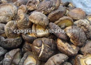 Organic Shitake Mushrooms(Lentinulla Edodes,Reishi,Maitake)