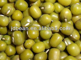 2015 corp high quality green mung been / mung dal