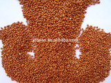 superior quality red broom corn millet for sale