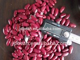 Superior quality Dark Red Kidney Beans for bulk sales