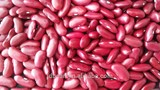 High Quality Dark Red Kidney Bean C2