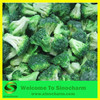supply good price Frozen broccoli