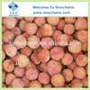 New Crop Frozen Litchi Whole