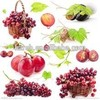 High quality Best Price Natural grape seed extract 95%