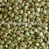 organic buckwheat kernel