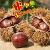New Crop Chinese Fresh Chestnuts for sale---Hebei Bulk chestnuts