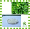 Chinese Holly Leaf Extract Powder Protocatechuic acid