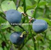 Bilberry extract,25% Anthocyanosides