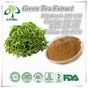 Green tea extract powder tea polyphenol