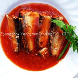 3-5pcs/tin canned sardine in hot tomato sauce