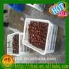 2015 health food fresh chestnuts wholesale/vacuum packed roasted chestnuts/tianjin roasted chestnuts