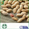 Big Size Roasted Groundnut/Peanut in Shell