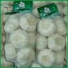 Fresh white garlic/Garlic with 500g packing/Jinxiang Garlic