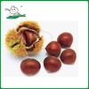 Chestnut/Fresh chestnut/ Chestnut wholesale