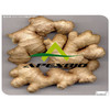 natural plant gingerol ginger root extract