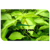 health foods nettle leaf extract powder