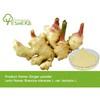 Fresh ginger/market price for fresh ginger/bulk fresh ginger