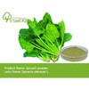 spinach extract/spinach extract powder/natural spinach extract