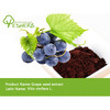 100% natural high proanthocyanidins Grape Seed Extract