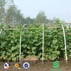 HDPE High quality Cucumber Yam Support Plant Trellis Net